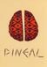 Studio Pineal
