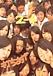 米西104期~元2の4☆恭子組