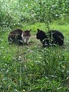 立川地域猫の会