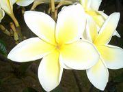 ฺI  love flowers