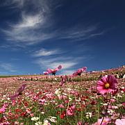 美しい自然風景に癒されたい