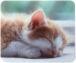猫の寝顔〜寝返り美人〜