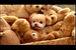 世界一かわいい犬ウィンクル