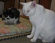飼い猫が凶暴