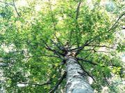 ★Big Tree of Happiness★