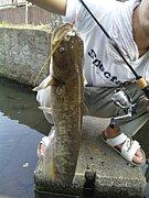埼玉県南西部の釣り