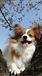 犬の幸せを考えよう(^O^)/