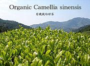 茶葉ごと飲むお茶@organic