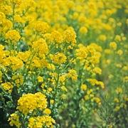 花の種蒔きテロ