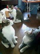 猫の会 in 大阪