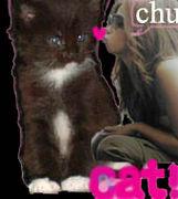 ♥猫と住んでる♥