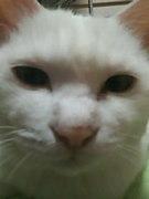リネ2 〜ルナ鯖〜