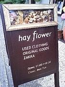 hay flower