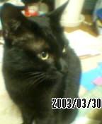 黒猫にゃんにゃん愛好会