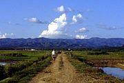 雲南省シーサパンナ西双版納