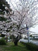 2010年ママin愛知(・∀・)