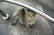 世界中の街角で猫を激写しよう