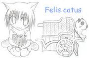 Felis c@tus