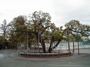 上板橋小学校
