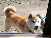 尋ね犬・迷い犬【群馬県】