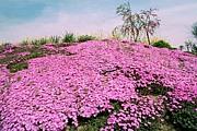 北海道の春夏秋冬を楽しむ会
