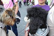 イタリアで犬を飼おう♪
