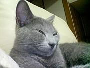埼玉 迷子猫のコミュ