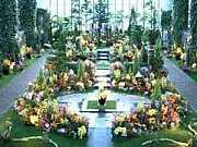 夢舞台奇跡の星植物館