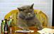 干支に猫がいないのは不公平だ!
