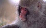 日本猿が一番