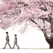 「桜」コブクロ