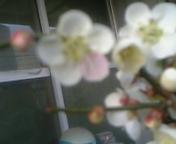 梅花天舞流