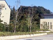 大船の大学(みどり系)