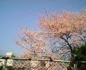 チームさとぅ〜☆桜橋TAの会☆