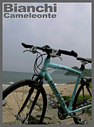 Bianchi(ビアンキ)Cameleonte