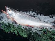 魚の皮は食べ物ではございません