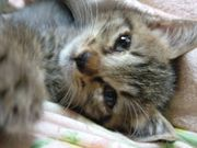 めぐまれない猫たちに愛の手を