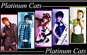 Platinum Cats