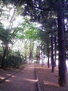 世田谷公園でジョギング