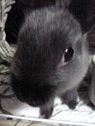 ミニウサギ、はじめました♪