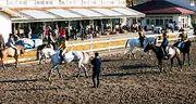 府中乗馬スポーツ少年団