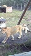 アフリカ毛布2010