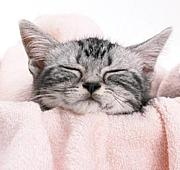 気持ちいい眠り