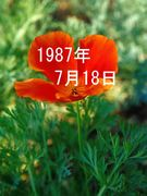 1987年7月18日生まれ