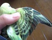 羽まで愛でる