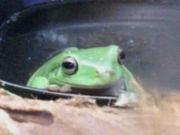 ☆★神様 仏様 蛙様 イエアメ様★☆