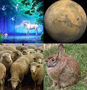 銀ペガサス+火星人-+牡羊座+卯年
