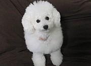誘拐犬のココ捜索 銚子&神栖