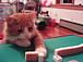 麻雀猫格闘倶楽部