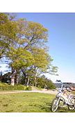 クロスバイク部@京都